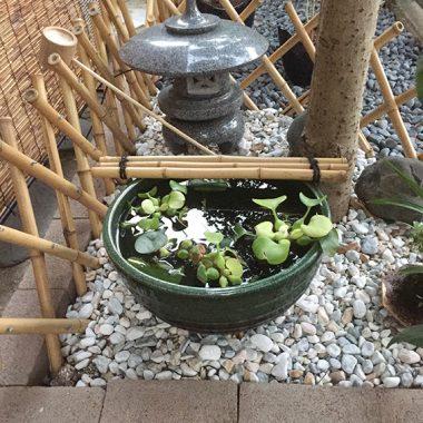我が家の日本庭園