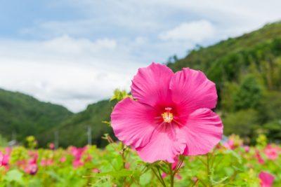 何も咲かない寒い日は、下へ下へと根を伸ばせ。やがて大きな花が咲く